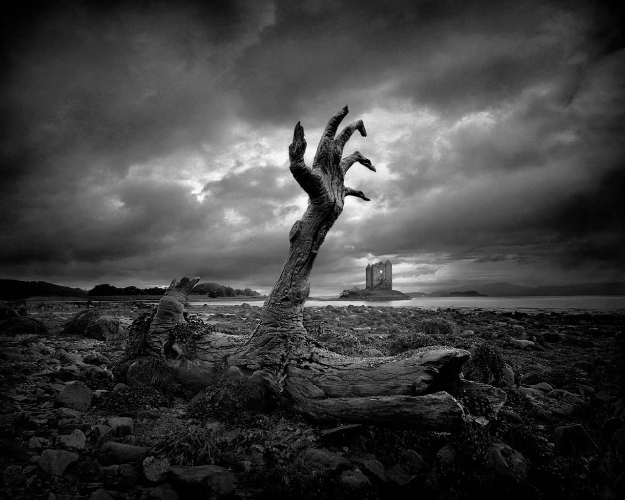 Horror Art : Remains of a Tree OR Rise of the Undead... you decide! #zombieapocalypse  ?