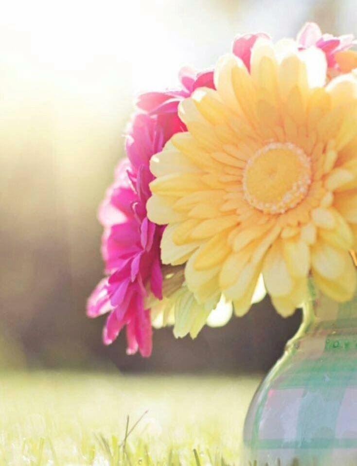 Pin by richmondmom on flowers pinterest flowers beautiful tuesday greetings tuesday morning good morning morning sayings nu skin beautiful flowers flower power tempo sadie m4hsunfo