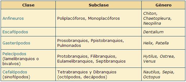 ZOOLOGÍA - INVERTEBRADOS: Moluscos - 2ª parte | Clasificacion de los ...