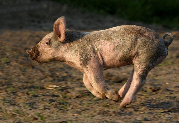 Flitz Foto & Bild | Natur, Tiere, Nutztiere Bilder auf fotocommunity