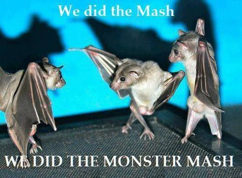 Bats in ass