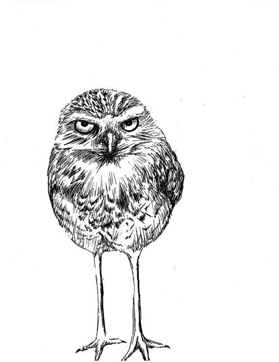 Burrowing Owl With Attitude Pen And Ink Print By Henny2pence