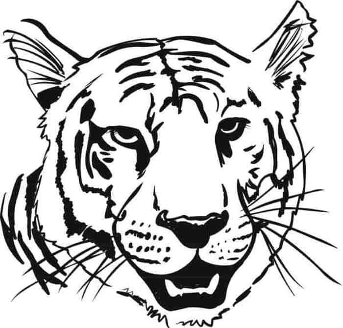 Tiger Head Coloring Pages Animal Coloring Pages Bird Coloring Pages Dog Coloring Page