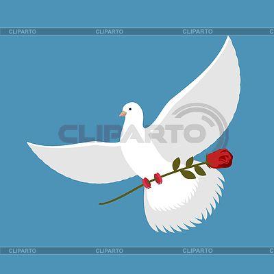 Белый голубь и красная роза. Красивая птица несет | Векторный клипарт | ID 6097680