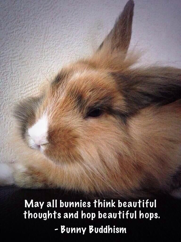 Pin by Emily Mastronardi on Bunny Buddhism | Rabbit cages