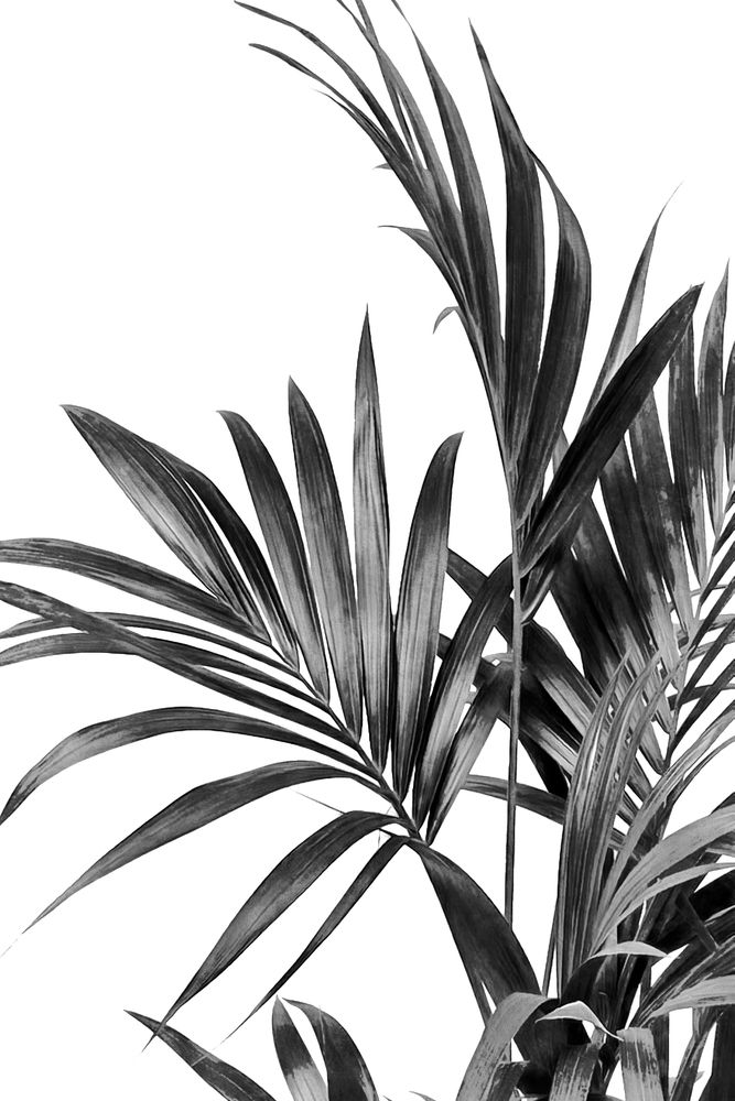 Palm Leaves Black and White 01 Art Print by amini54