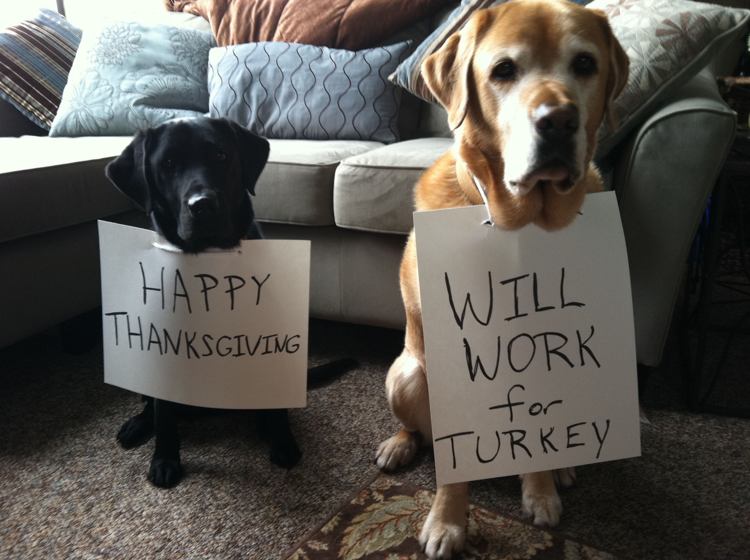 Happy Thanksgiving Dog Thanksgiving Funny Thanksgiving Memes Funny Thanksgiving