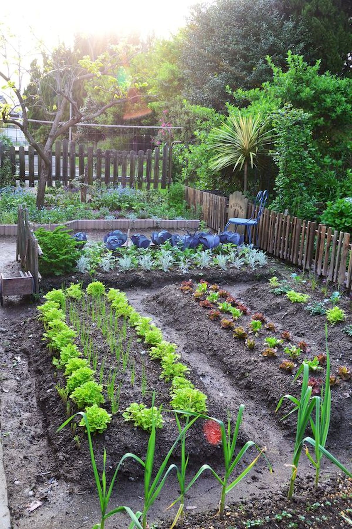 Best Vegetable Garden Design Ideas Perfect For Beginners