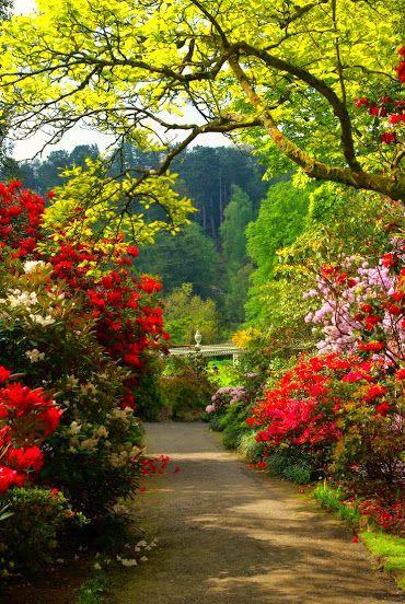 Jard n mi jardin jardin en balcon jardines y rboles for Jardines con arboles y arbustos