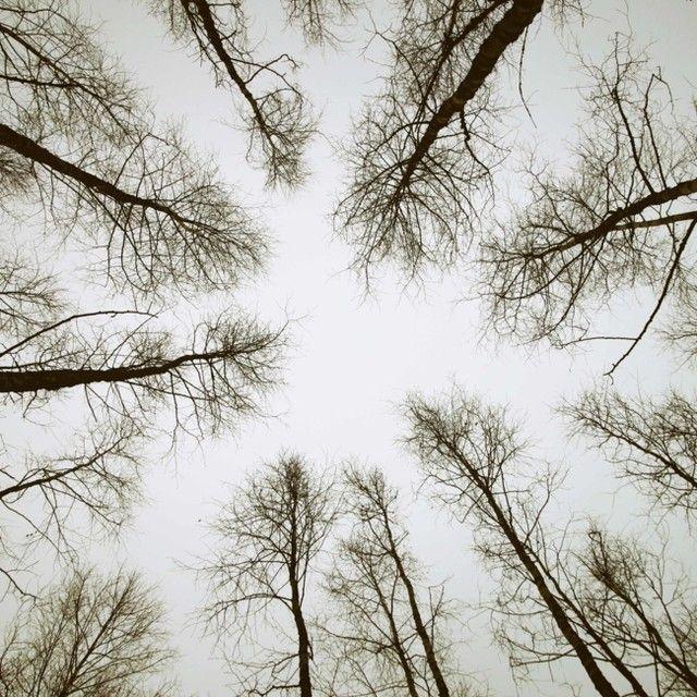 Vaya días húmedos hemos pasado por aquí, con tanta lluvia y nieve, y cielo gris ceniza. Lo único que deseo ahora mismísimo es sentir la suavidad del sol en la piel. Aunque los paisajes con este halo monocromo también tienen su parte bonica, no hay nada más revitalizante que la calidez del sol y de su luz 🙏 . . . #landscape #winter #wintersky #meditation #cold #ilovenature #ouiclementine
