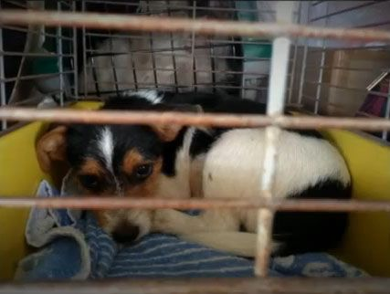 Australia 109 Dogs Rescued From Puppy Farm More Await Rescue