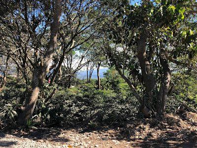 MPaniagua bienes raices: 0467001 Finca, Centro, San Miguel, Naranjo,  Alaju...
