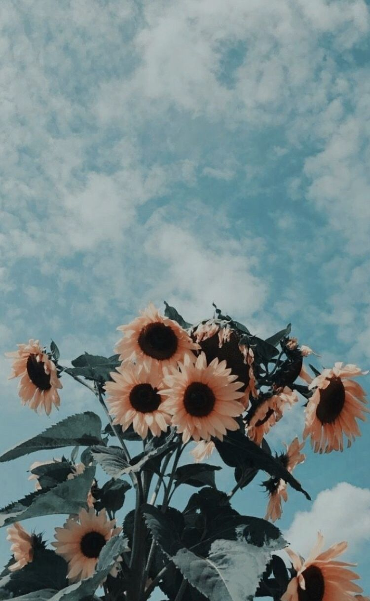 Sunflowers Iphone Phone Background Aesthetic Filters Wallpapers