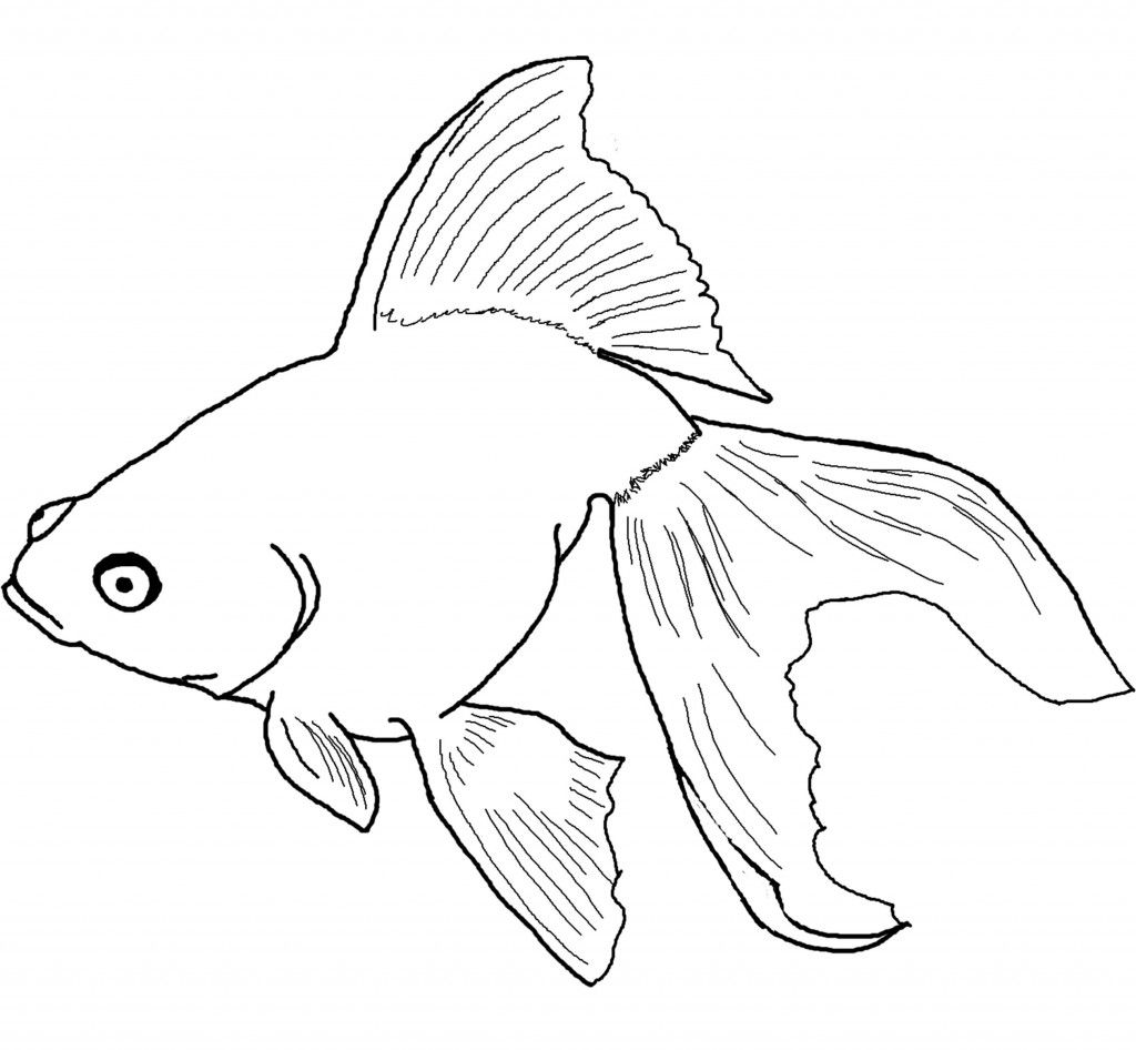 Awesome Goldfish Free Pictures To Colors Fish Coloring Page Animal Coloring Pages Coloring Pages