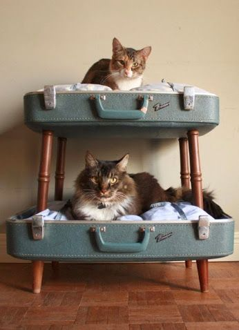 Two cats in homemade suitcase bunk beds. This is adorable and vintage. You know these #cats are spoiled. LOL very #cute! Have a good Saturday #CatLovers! ~Me