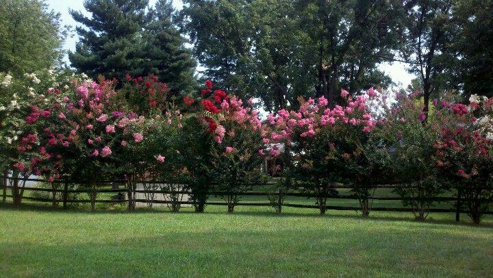 Me gusta mi patio con esos arbustos de flores for Jardines con arboles y arbustos