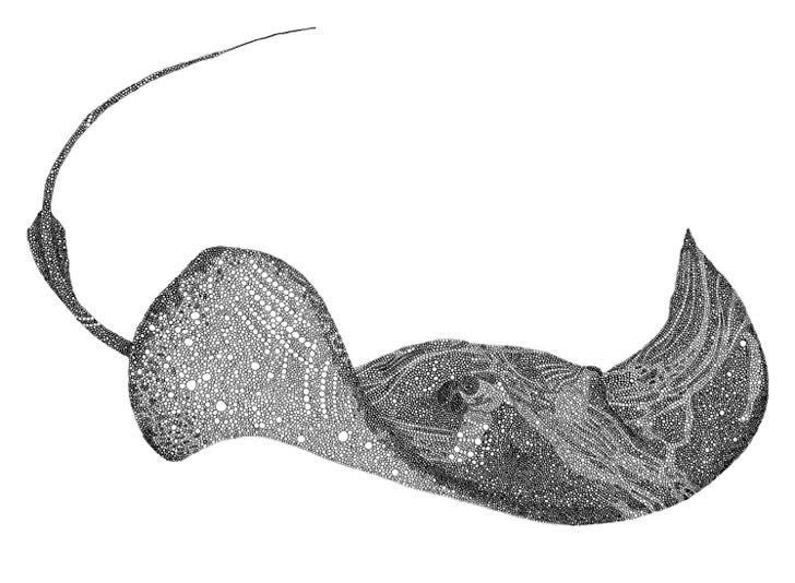 Drawing by Joseph Pfeifer (5)