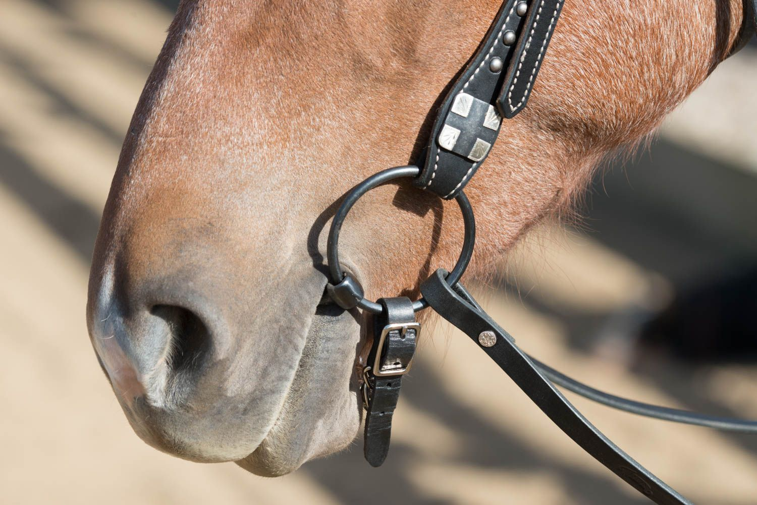 Looking For An O Ring Or Loose Ring Snaffle Bit We Re Your One Stop Shop For Quality Tack Including Bits Mens Bracelet Snaffle Bit Leather