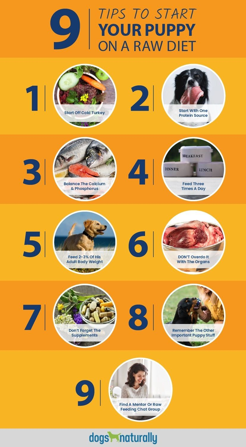 Starting Your Puppy On A Raw Diet Dogs Naturally Magazine Dogs Naturally Magazine Dog Raw Diet Raw Diet