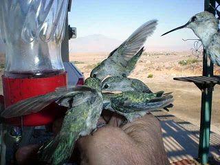 Hummers and Airplanes: HUMMERS and AIRPLANES