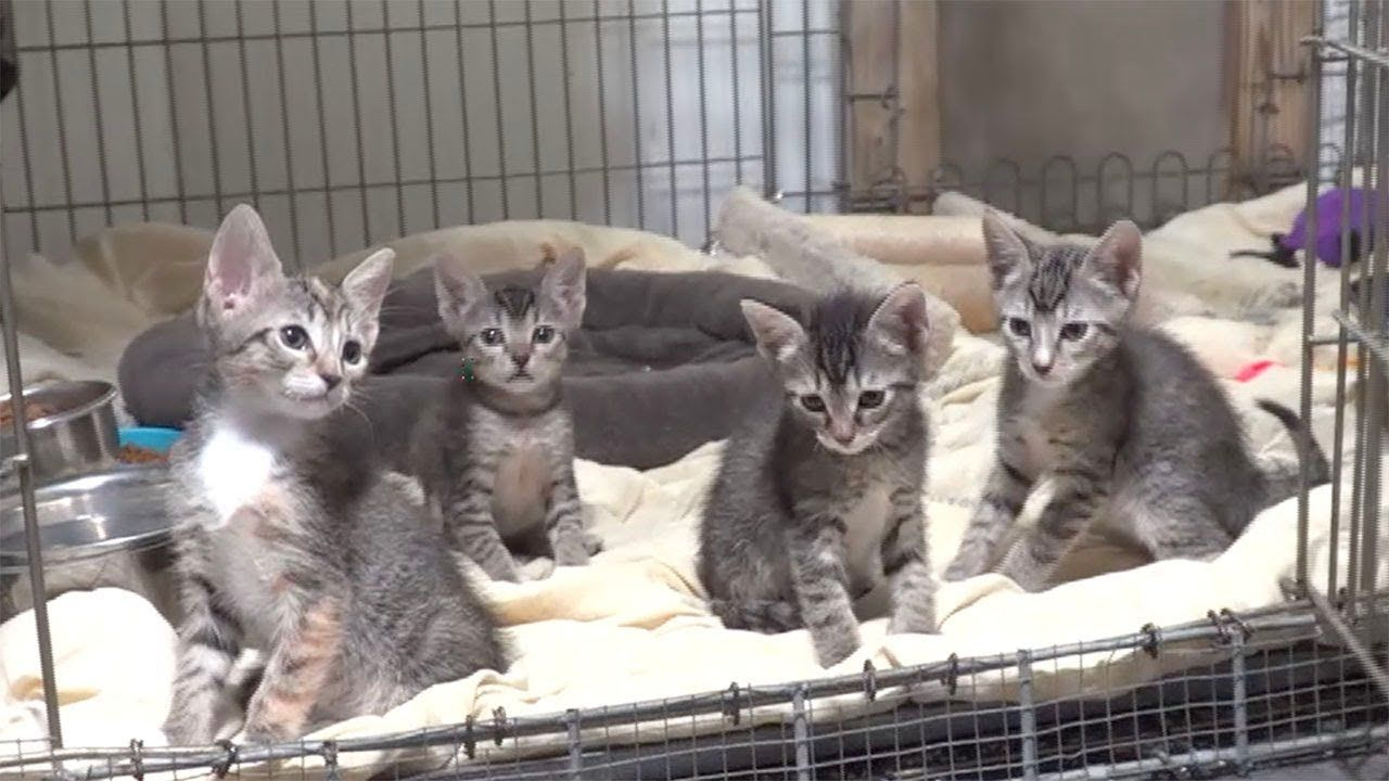 Special Kittens Different Is Better Cute Kitten Gif Kittens Big Cat Rescue