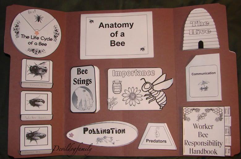 bee lapbook homeschool science pinterest bienen schule und bienen basteln. Black Bedroom Furniture Sets. Home Design Ideas