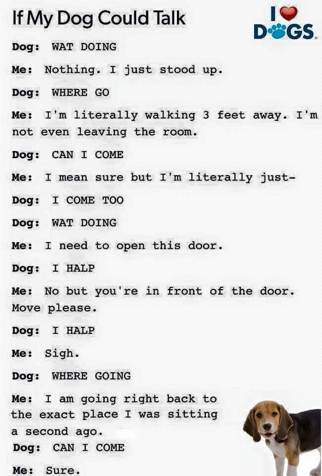 If my dog could talk.