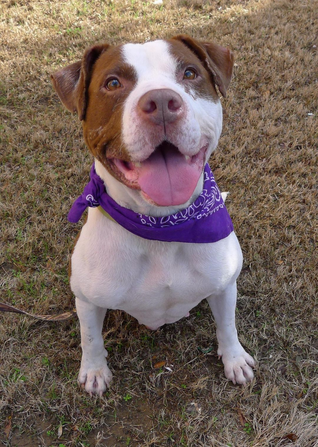 Adopt Baxter On Pets Needing A Home In Alabama Dogs Rescue