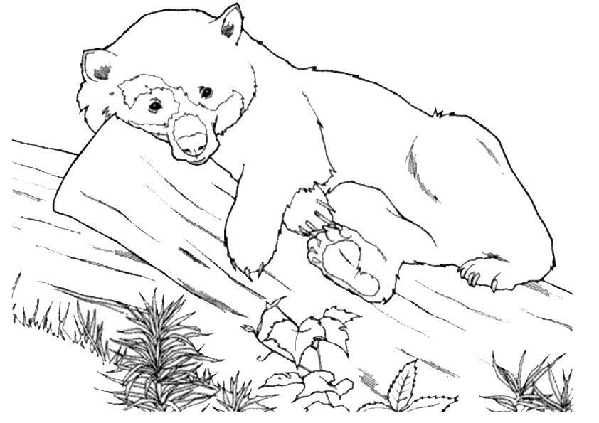 Ausmalbilder Bär | animal coloring | Pinterest | Ausmalbilder, Bären ...
