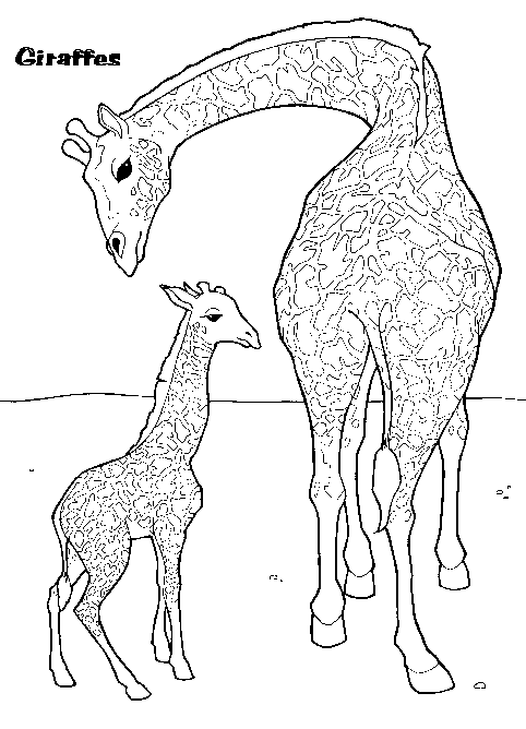 giraffe and baby coloring page  coloring book  giraffe