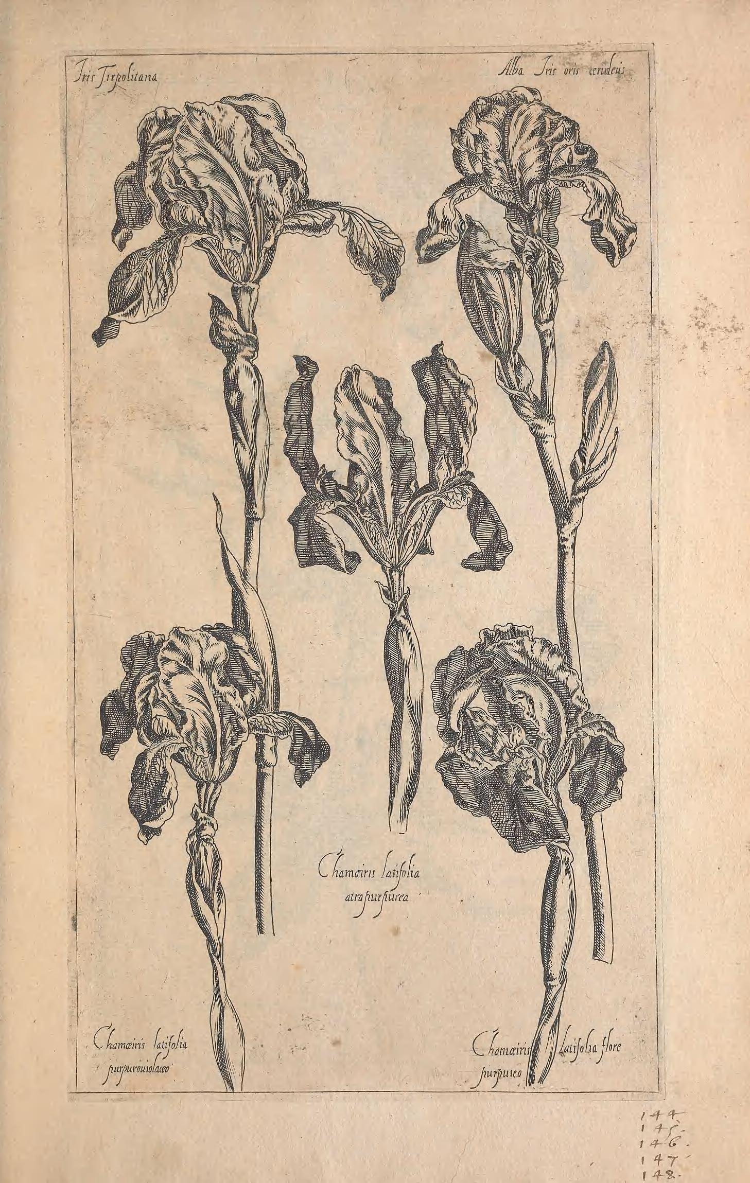 Le jardin du Roy tres chrestien, Loys XIII, Roy de France et de Navare ... / - Biodiversity Heritage Library