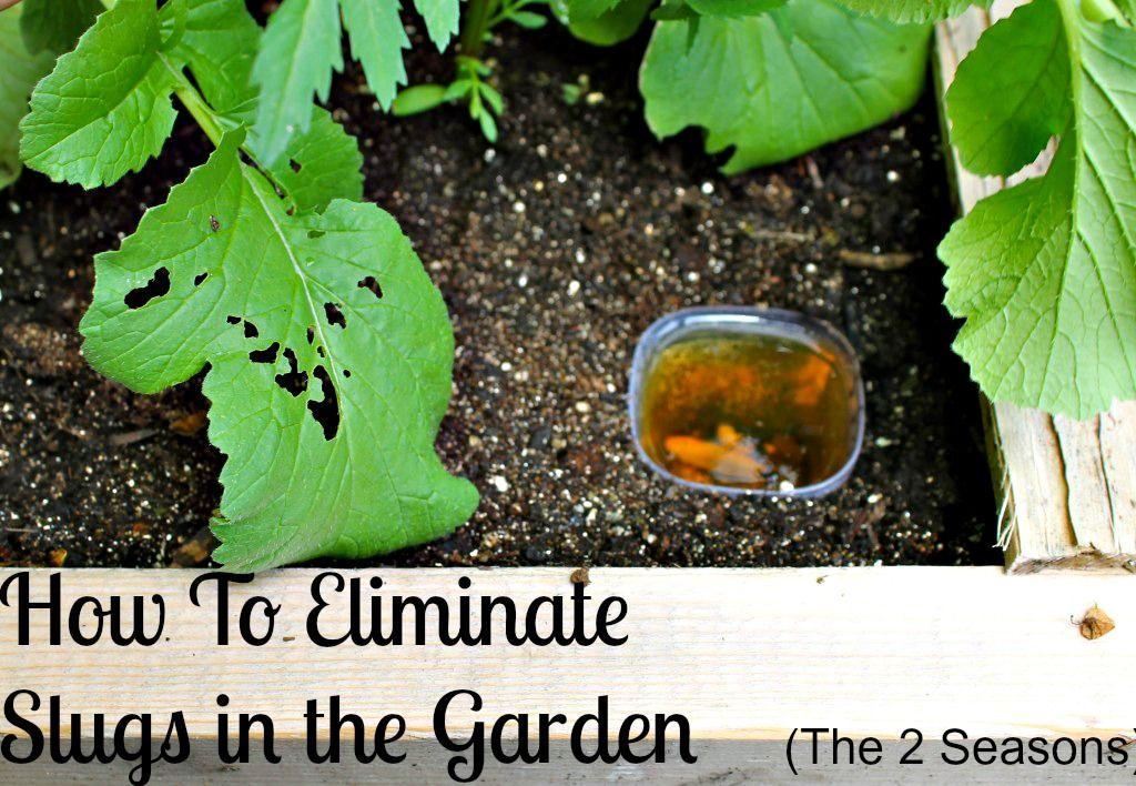 How To Eliminate Garden Slugs   Slugs in garden, Backyard ...