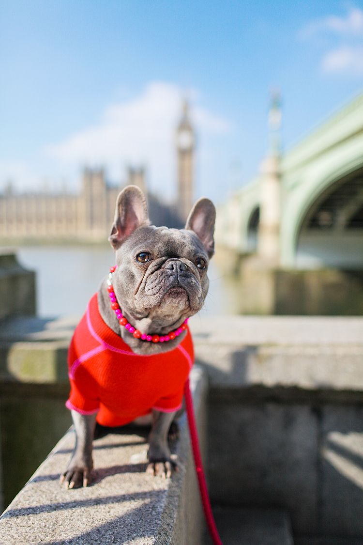 Pet Photography In Westminster And Notting Hill Pets Animal