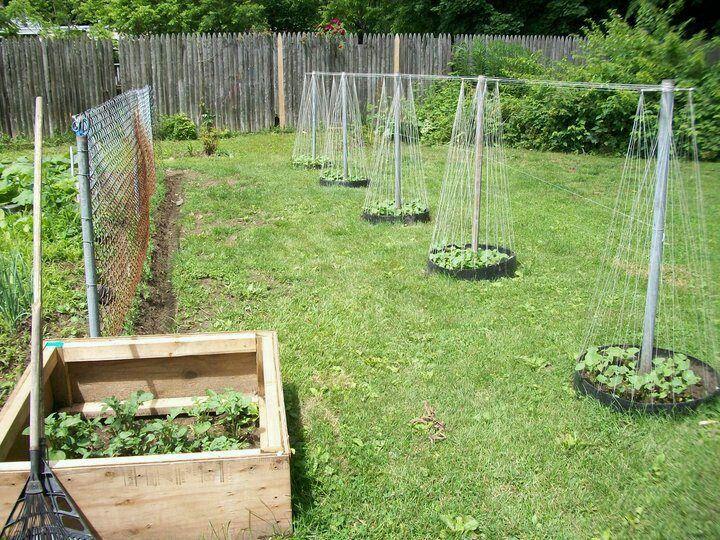 Bean teepees Garden, Garden compost, Garden landscaping