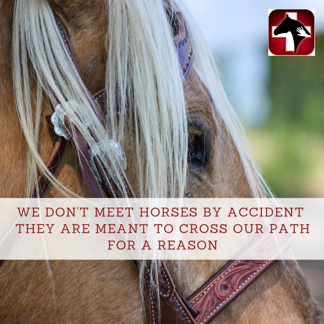 Tell Us About Your Horse S Horse Health Equine Nutrition Health Resources