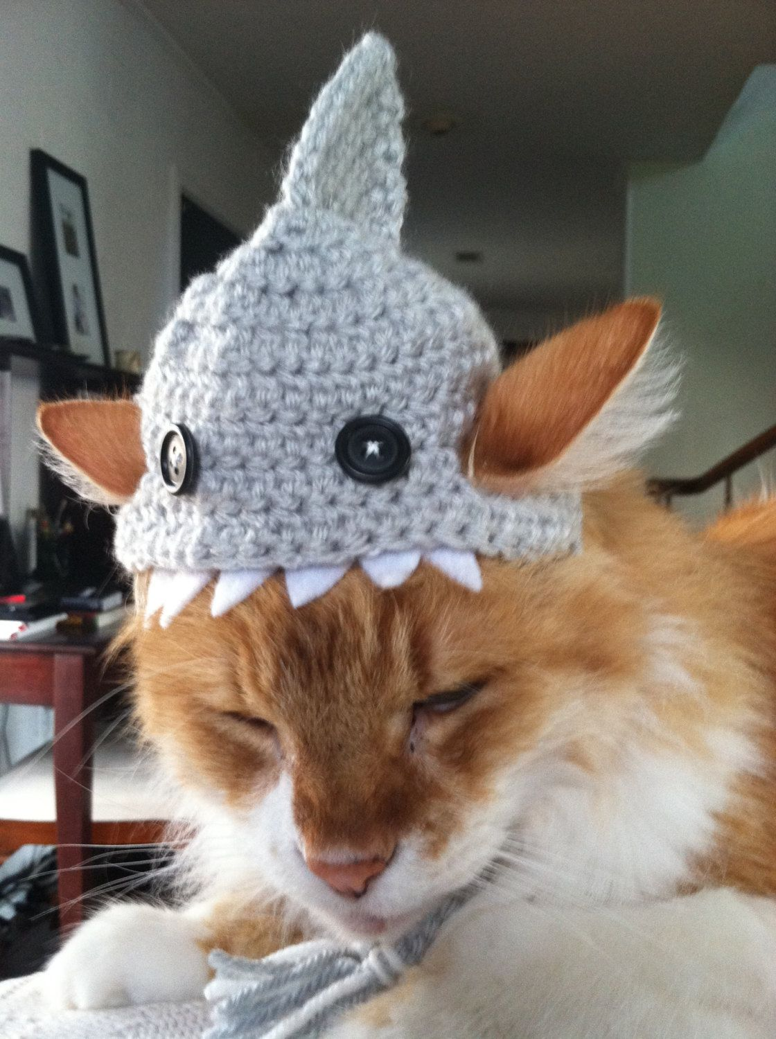 Crocheted Shark Hat for Cats by TheBloomingPot on Etsy