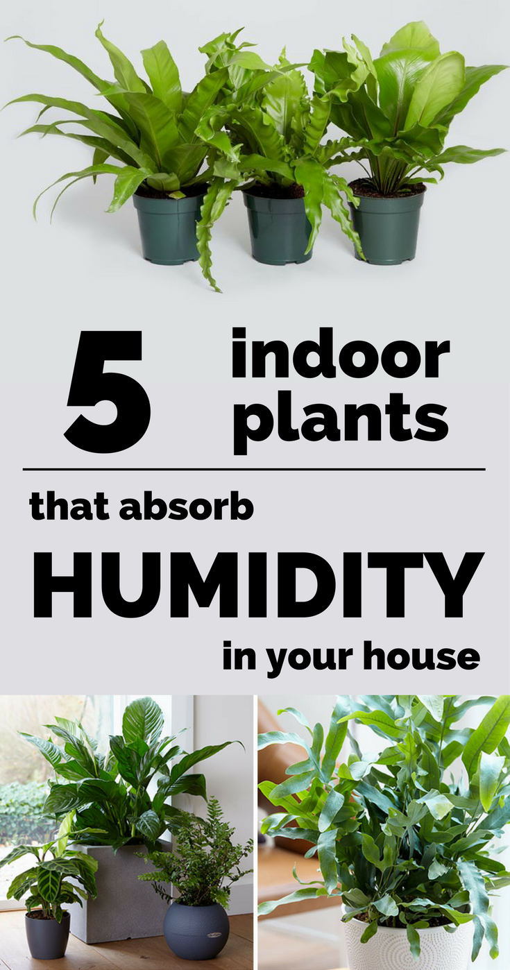 5 Indoor Plants That Absorb Humidity In Your House Plants Bathroom Plants Indoor Plants