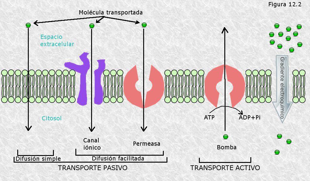 Pin En Fotosintesis Respiracion Y Division Celular
