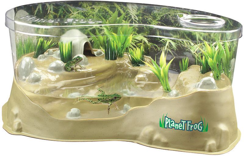 Unclmelton Con Frog Habitat Frog Tadpole To Frog