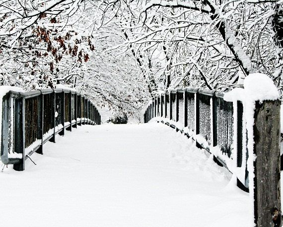 SALE Winter Landscape Snowy Trees Lacey Branches Path Bridge Rustic White Gray Grey Black Snow