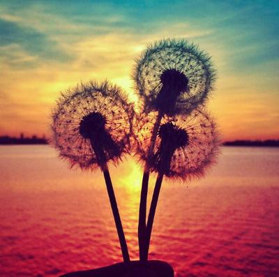 Tapety Na Telefon Dotykowy Szukaj W Google Sunset Photography Tumblr Backgrounds Dandelion