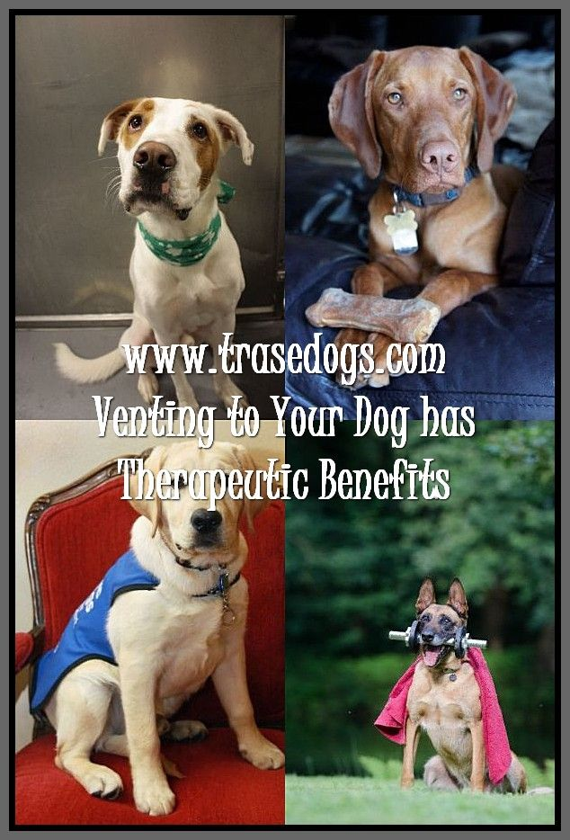 Easy Ways Of Caring Of A Dog Dogs Training Your Dog Your Dog