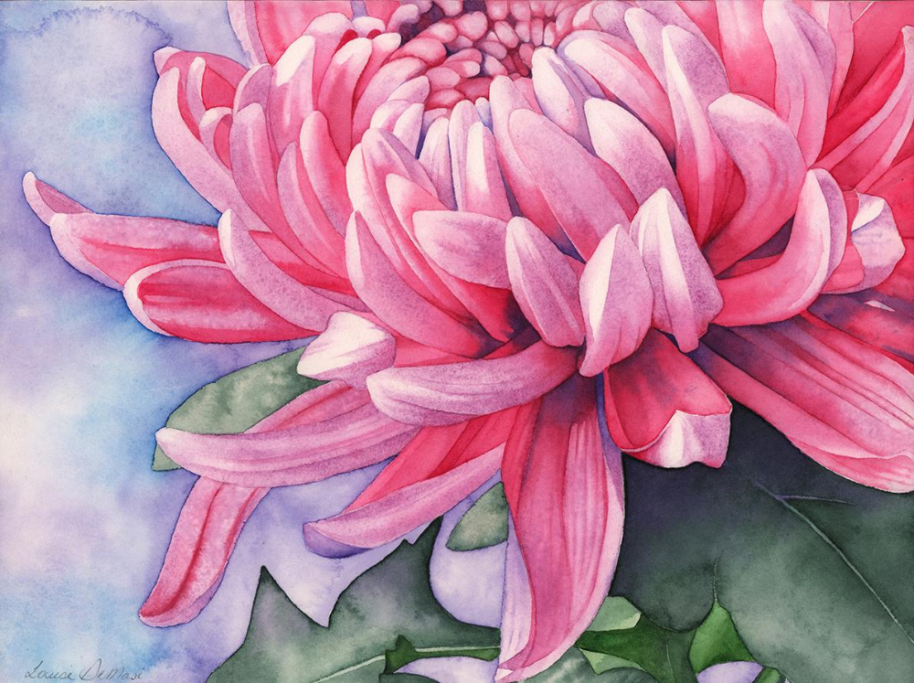 Master Watercolour Techniques Paint A Watercolour Chrysanthemum Painting Onto A Board Chrysanthemum Painting Chrysanthemum Watercolor Chrysanthemum Drawing