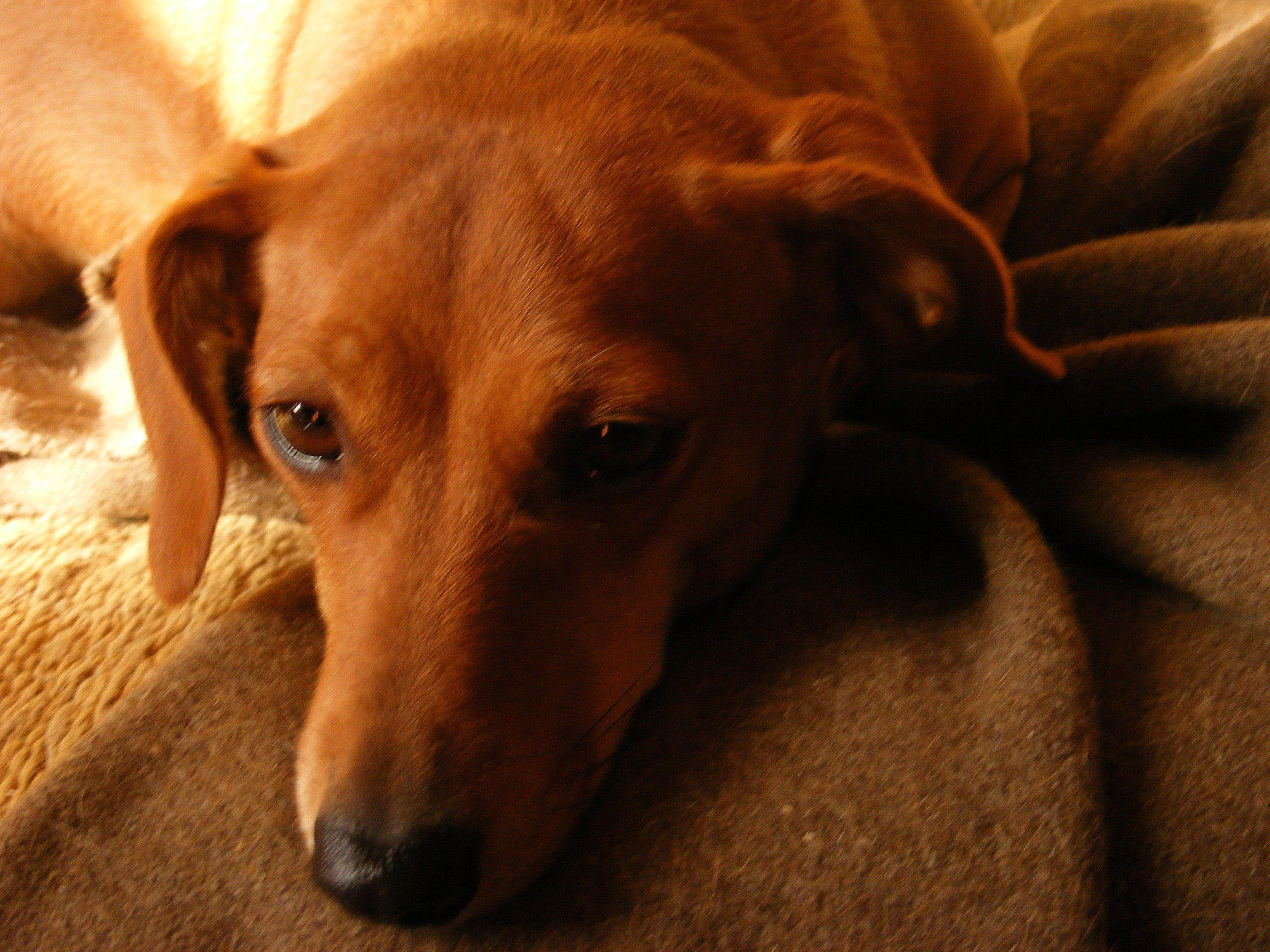 Understanding The Stages Of Dog Labor Dog Labor Dog Upset