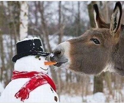 carrot, deer? Funny animal pictures, Animals beautiful