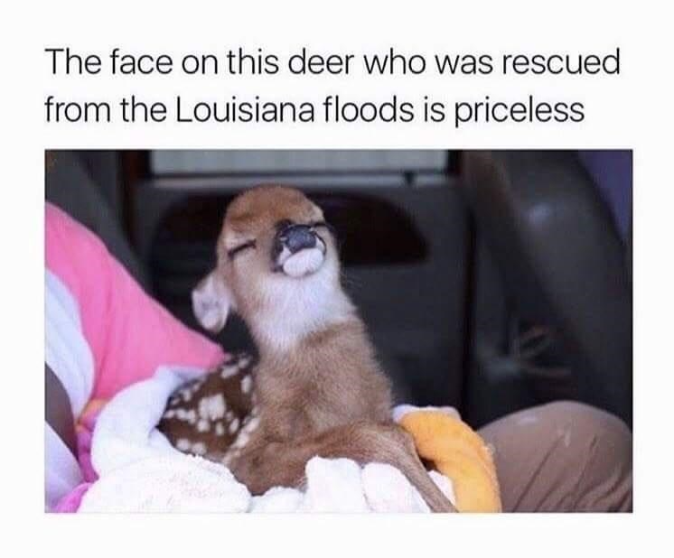 Morning Wake Up Call Fresh Animal Memes January 24th 2021 In 2021 Animal Memes Funny Animal Pictures Really Funny Dog Videos