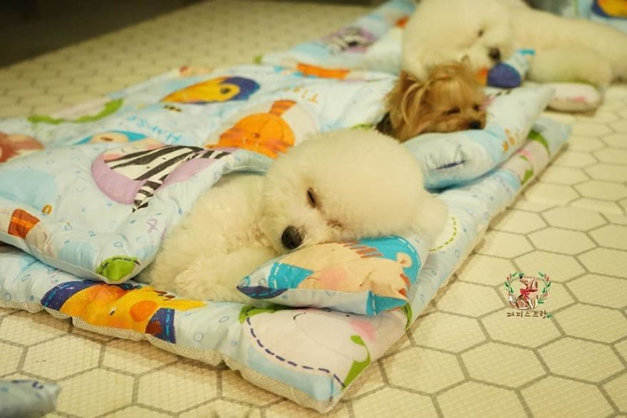 Photos Of Sleeping Pups In A Puppy Daycare Center Are