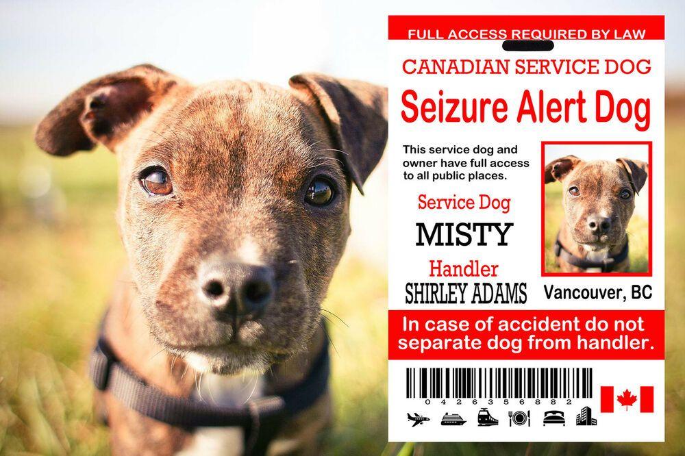 Canadian service dog card seizure alert id tag service