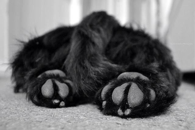 Gino's paws