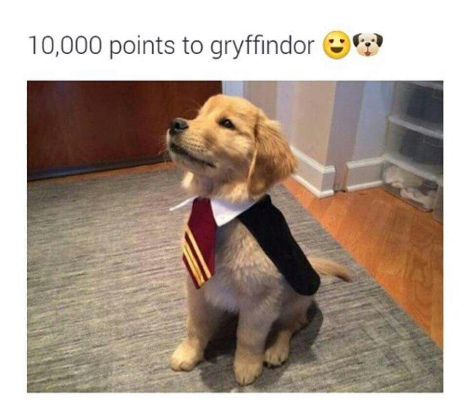 Aweee Harry Potter 3 Harry Potter Dog Harry Potter Harry